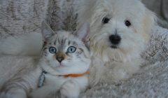 koty i psy
